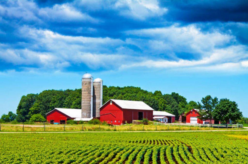 New York Farm Services Agency