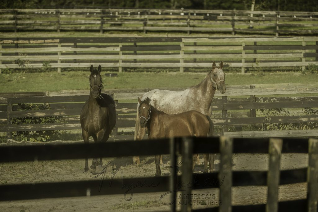 horse property auctions