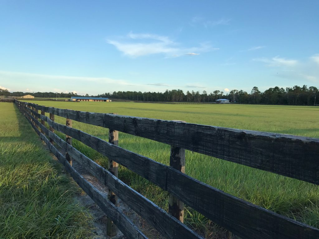 equestrian horse farms in florida