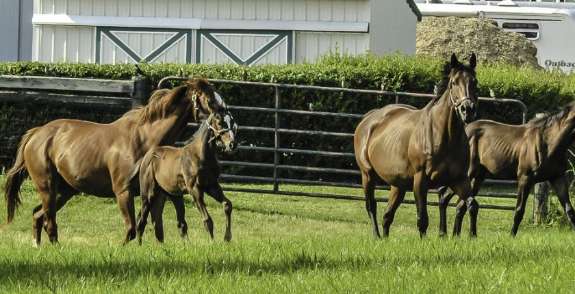 horse race schedules