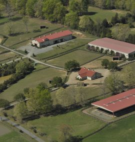 equestrian real estate auctions